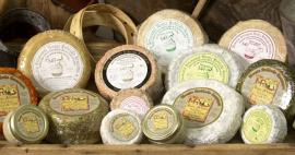 prueba-quesos-2