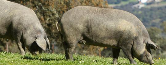lomo-de-cerdo