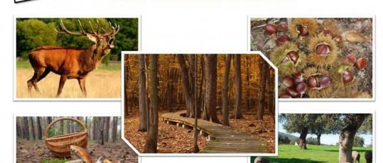 Planes para disfrutar del otoño en la Sierra de Aracena
