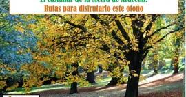 El castañar de la Sierra de Aracena: Rutas para disfrutarlo este otoño